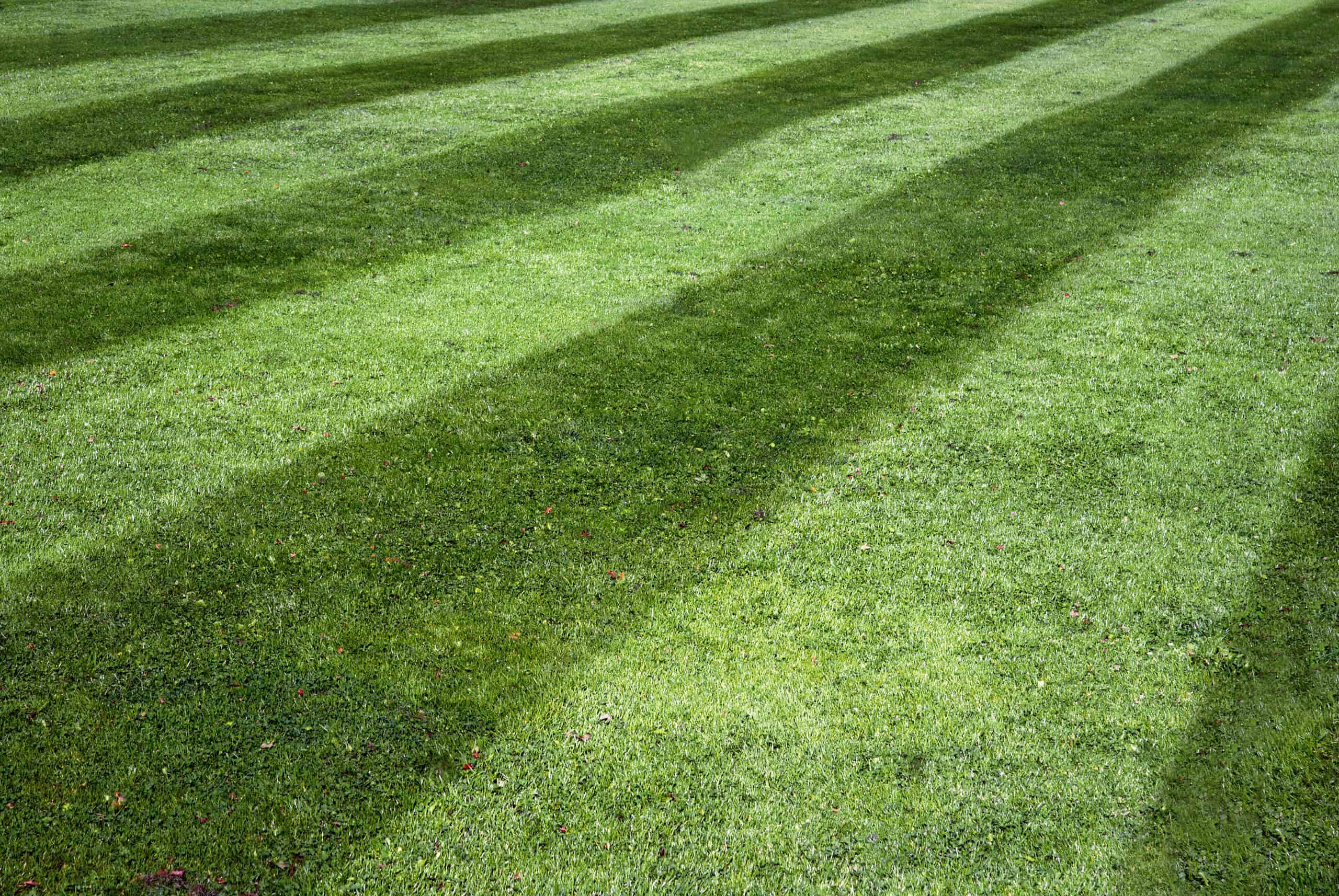 ideal lawn care mowing