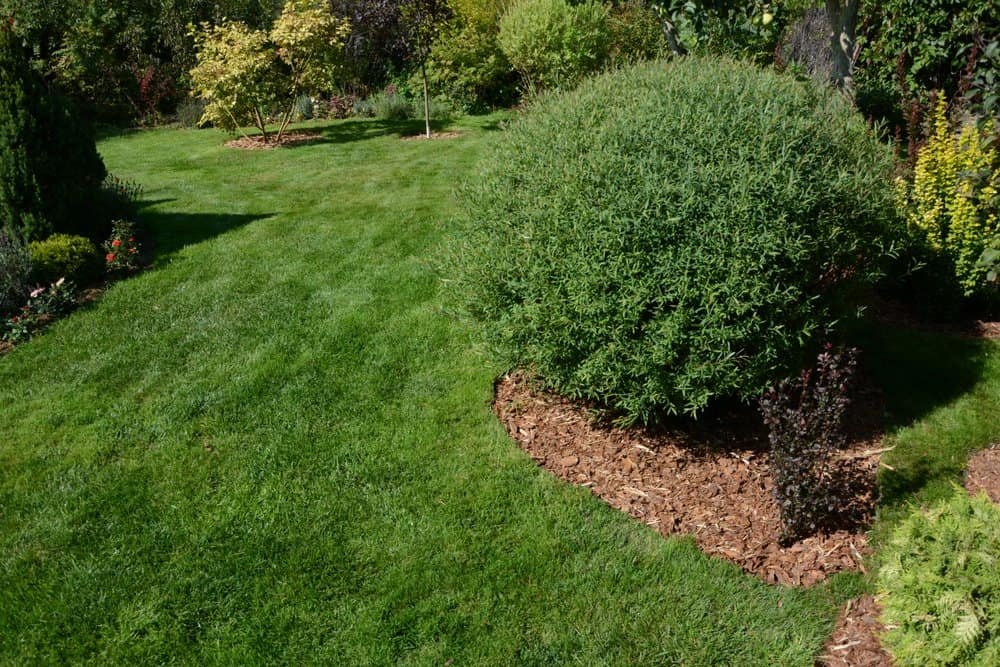 woodbury MN mulch installation